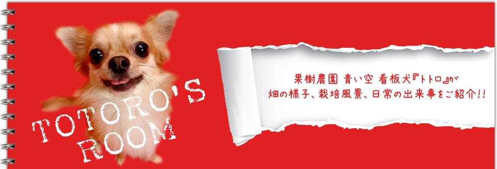 果樹農園 青い空 看板犬トトロのブログ『トトロの部屋』